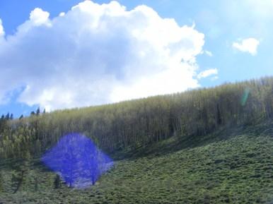 Ridge above Bear Creek on the Gunnison National Forest