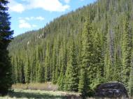 High up on Bear Creek