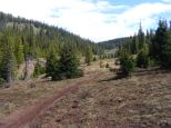 High up on the Bear Creek Trail, the grass has yet to green up in the middle of June