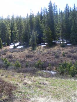 Snow on Bear Creek in mid-June