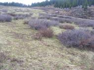 The headwaters of Bear Creek have yet to green up