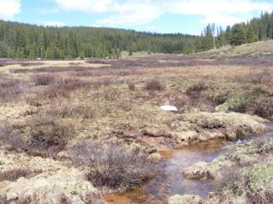 Bear Creek near its headwaters