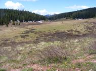 Looking down from the headwaters on Bear Creek