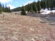 Reno Ridge trail was still covered in snow so I walked on the dry side