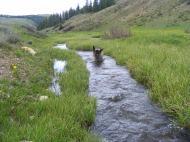 Leah wading upstream in Deadman Gulch