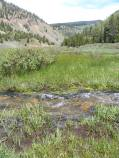 A wet Spring on Deadman Gulch