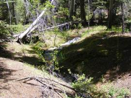 Ute Creek tumbling down through the ponderosa pine, Pike National Forest