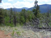Looking west while hiking on Ute Creek Trail