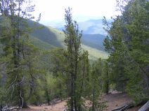 On Ute Creek Trail looking out over bristlecone pine at the headwaters of Ute Creek, Tarryall Creek's drainage visible in the view