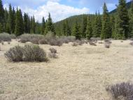 Small, open meadow at the headwaters of Indian Creek yet to have its grass green up