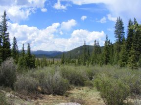 Sunny day on Indian Creek, Lost Creek Wilderness