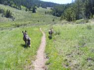 Leah and Draco on the Wigwam Trail near Lost Park Trailhead