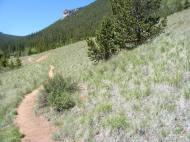 Bristlecone pine adjacent to the Wigwam Trail, Lost Creek Wilderness