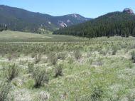 East Lost Park, wide open meadow