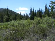 Just over the pass from Lost Creek into the Wigwam Creek drainage