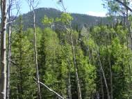 Vibrantly green aspen in upper Wigwam Creek