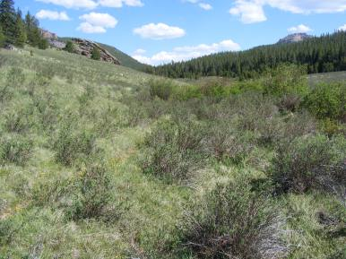 A fine day in East Lost Park, Lost Creek Wilderness