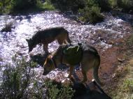 Draco and Leah in the Lost Creek Wilderness