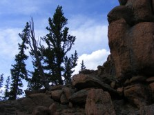Bristlecone pines growing atop the granitic outcropping west of Bison Pass