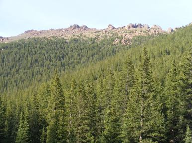 Thick forest near Bison Peak and Pass