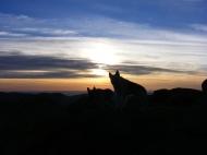 Draco at sunrise on Bison Peak