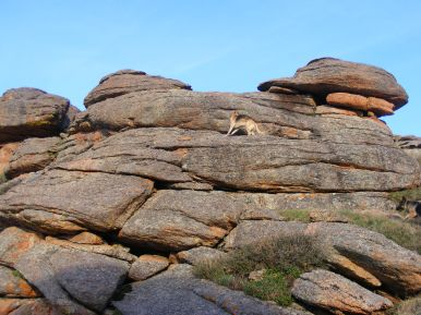 Draco climbing granite