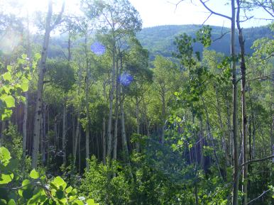 """The aspen forest from Wild Cherry Creek to the ridge of its """"V""""-shaped canyon"""