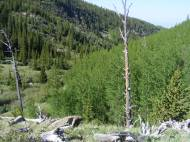 The last of the aspen forest on Wild Cherry Creek