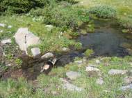The spring on Wild Cherry Creek, Leah cooling off in the water
