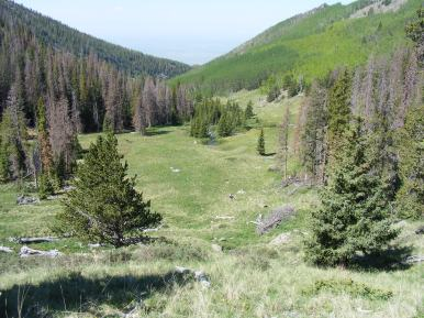 Just above the spring, Wild Cherry Trail gaining altitude
