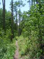The lower elevation of Wild Cherry Trail