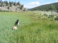 Draco and Leah in an East Pass Creek Meadow near Colorado 114 in the Cochetopa Hills