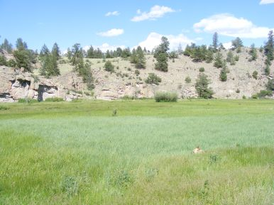 Draco is barely visible in the tall grass of East Pass Creek, just off Colorado 114