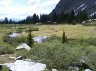 Above Lamphier Lake in the Fossil Ridge Wilderness Area, this marsh is soaked with snow-melt