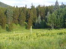 Meadow near the headwaters of Carbon Creek, just of the Carbon Trail