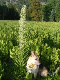 Draco in front of a monument plant just off the Carbon Trail at the headwaters of Carbon Creek