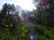 Along the Carbon Trail, the morning light pours through the forest