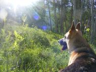 Draco in the morning light on our hike to Mount Axtell