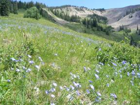 Field of flax on the southern shoulder of Mount Axtell matches the color of the sky