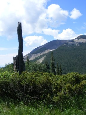 Snag with Carbon Peak in the background