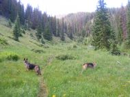Leah and Draco on the East Fork of Alpine Gulch