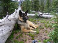Leah lounging against a log in the saddle between Grassy Mountain and Point 12,601