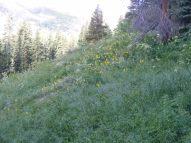 Flowery hillside near Green Lake