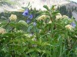 Wetlands wildflowers under Mount Axtell