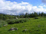 Verdure near Green Lake