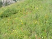 Wildflower strewn hillside near Green Lake