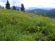 Wildflower spectacle near Green Lake just outside of the town of Crested Butte