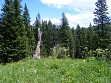 Flowery forest meadow near Green Lake