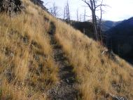 Game trail above the unnamed second fork of Cache Creek