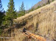 On the unnamed second fork of Cache Creek, new trees regenerating from beneath the old forest